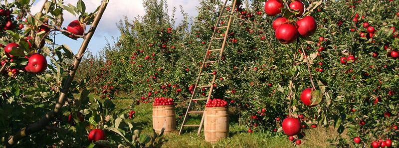 Asigurarea culturilor